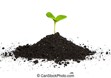 Heap dirt with a green plant sprout isolated on white ...