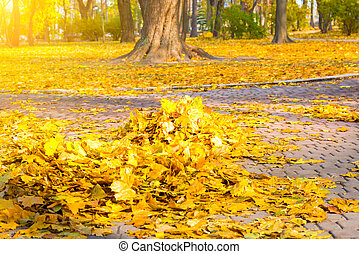 Heap of autumn yellow leaves - Cleaning in the park - heap...