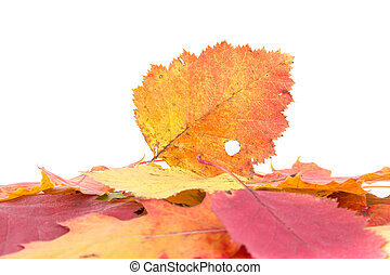 Heap of autumnal leaves