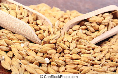Heap of barley grain with wooden spoon