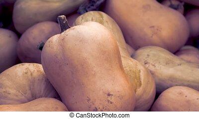 Heap of Butternut Squash Pumpkins, Cucurbita moschata, Zoom...