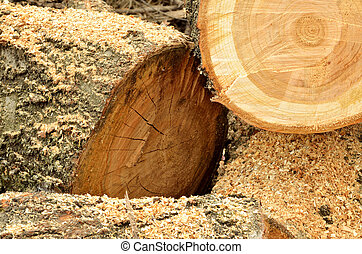 Heap of cutted wood and sawdust