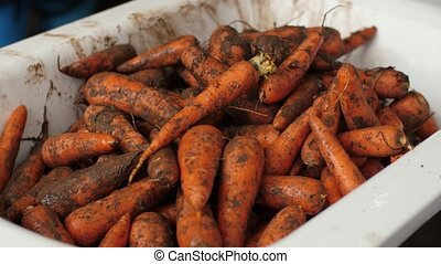 Heap of dirty carrots in a pan