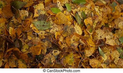 heap of dirty wet yellow leaves trees autumn nature background