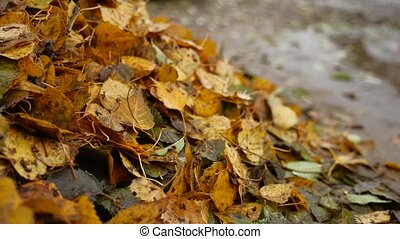 heap of dirty wet yellow leaves trees nature autumn background