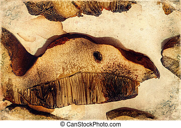 Heap of dried edible mushrooms on paper, old photo effect...