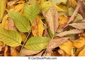 Heap of dried leaves