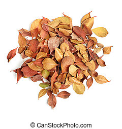heap of dry leaves on white background