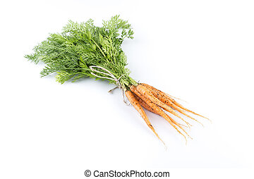 freshly picked carrots - heap of freshly picked carrots...