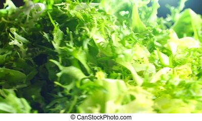 Heap of green frisse salad leaves on a rotating plate
