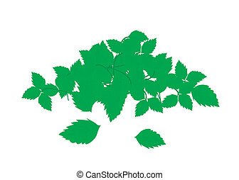 Heap of Holy Basil Leaves on White Background - Vegetable...