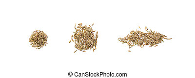 Heap of Loan Grass Seeds Isolated on White Background