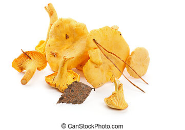 Raw Chanterelles - Heap of Raw Chanterelles with Dry Leafs ...