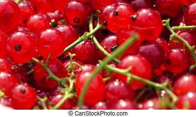 Heap of red currant with stems 4K macro dolly clip - Red...