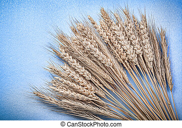 Heap of ripe rye wheat ears on blue background top view