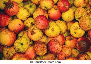 heap of rotten apples