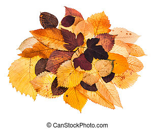 heap of various autumn fallen leaves isolated - heap of...