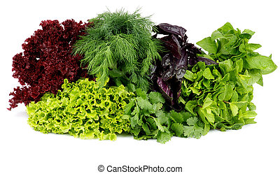 Greens - Heap of Various Fresh Greens with Lettuce, Basil,...