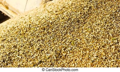 Heap of wheat grains, close up. Flowing grains in a factory.