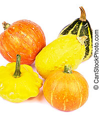 Squash and Pumpkins - Heap of Yellow and Orange Miniature...