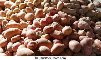 Heaping potatoes into pile