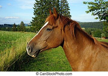 Heard of horse