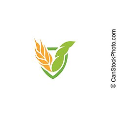 hearldic, produit, blé, icône, couleur nature, résumé, isolé, illustration, élément, logotype., vecteur, grain, agricole, orange, organique, oreille, logo., signe., récolte