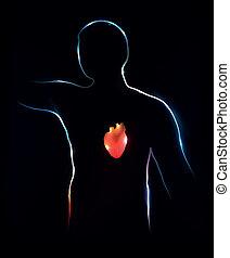 heart., abstrakt, medicinsk illustration, baggrund.
