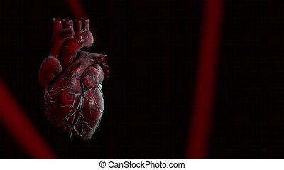 Heart and heart beat pulse video for medical apps and...