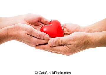 Heart at the human hands