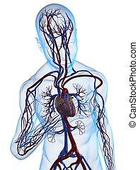 heart attack - 3d rendered illustration of a transparent ...