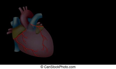Coronary arteries are highlighted, zoom in with details of cholesterol plaque and the heart stops beating as artery is blocked