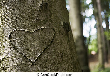 Heart carved in a Tree - Love Carved in the bark of a Tree