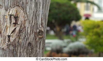 Dolly shot of a lovers heart carved into the bark of a tree with a park background.