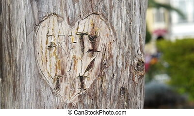 Heart Carved in Tree Handheld - Handheld shot of a lovers...