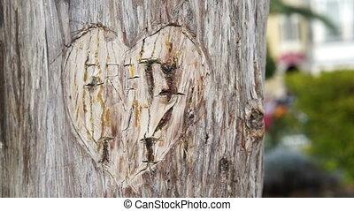Heart Carved in Tree Handheld - Handheld shot of a lovers...