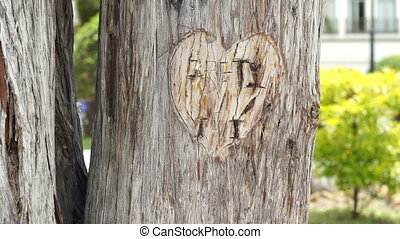Heart Carved in Tree Man Reminisces - Close up locked down...