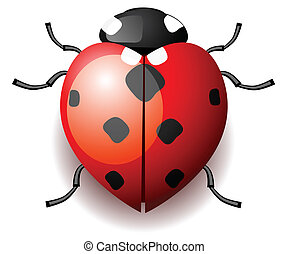 Heart form ladybird on white background