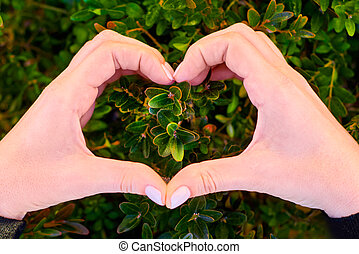 heart from hands on green plants. Protect the environment concept. world nature day