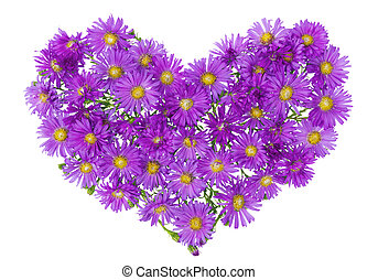 Heart from magenta chrysanthemums