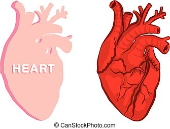 heart illustration vector