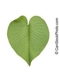 Heart leaf 1