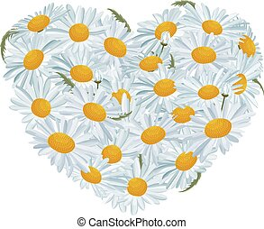 Heart made of white daisies