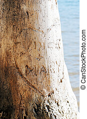 Heart & names carved in tree