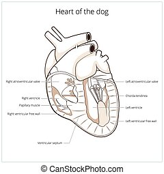 Heart of a dog vector illustration
