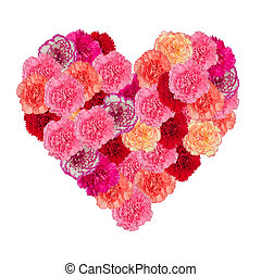 Heart of carnation flower isolated on white background