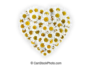 heart of daisies flower on white background