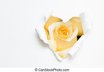 heart of paper and white rose