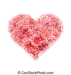 heart of pink roses Valentines Day on a white