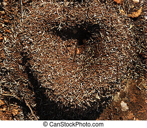 heart of the anthill in sunny day